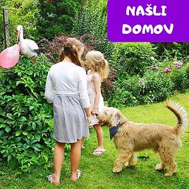NAŠLI_DOMOV.png