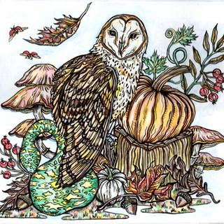 owl square copy.jpg
