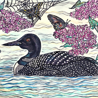 Spring Loon