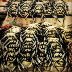 Crabs mountain!! #borntocook #mydubai #sea #seafood #dinnertime #food #fishmarket #executivechef #ch