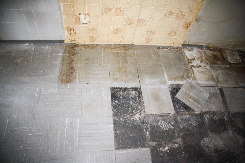 Floor Flex Platten Entfernen Und Entsorgen Haack Ihr Spezialist