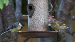 Five Steps to Get Started Feeding Birds in your Garden