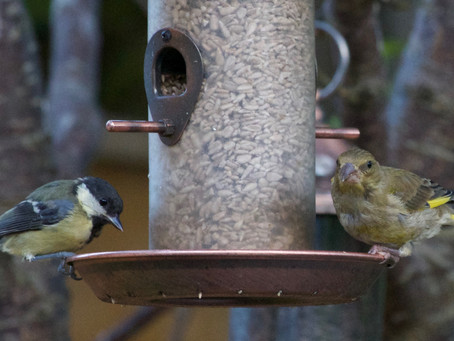 Five Steps to Get Started Feeding Birds in your Garden