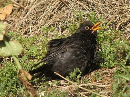 Lovely basking birds