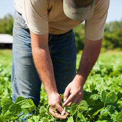 WAYWARD SEED FARM