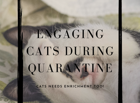 Cats and Quarantine! Social Distancing Experts From Day One.