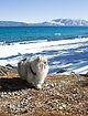 Glacier-park-Cats-CATRAVEL0516.jpg