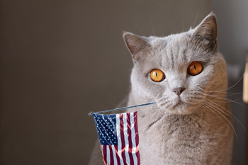 Fourth of July Cat Safety Tips