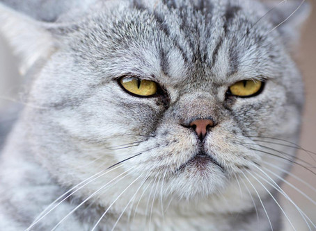 What Do Cats Think About Us? You May Be Surprised