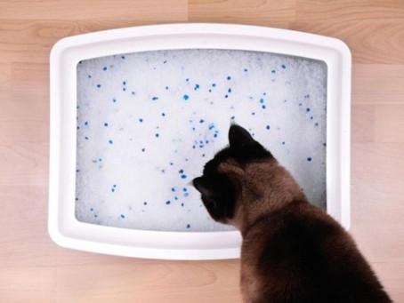 5 Pro Tips for Litter Box Training Your Kitten