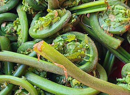 Farm Fresh Fiddleheads