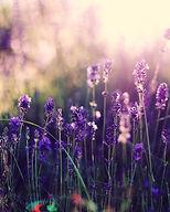 b4e7a96f282aad41bfd0efc9895e02cc--lavend