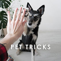 Pet tricks.jpg