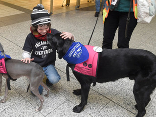 My Therapy Dog Teams at LGA Airport (article in NY Post)