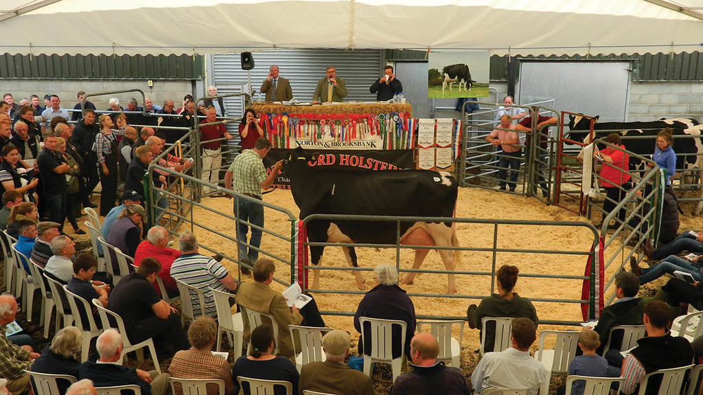 The Wyndford Dispersal Sale 2017