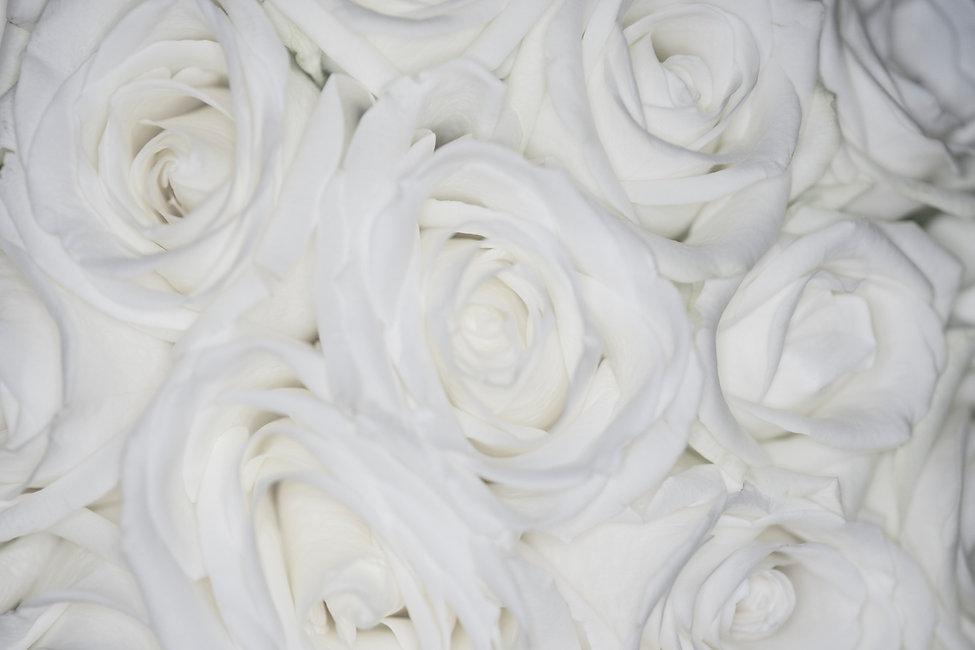 Roses Horizontal.jpg