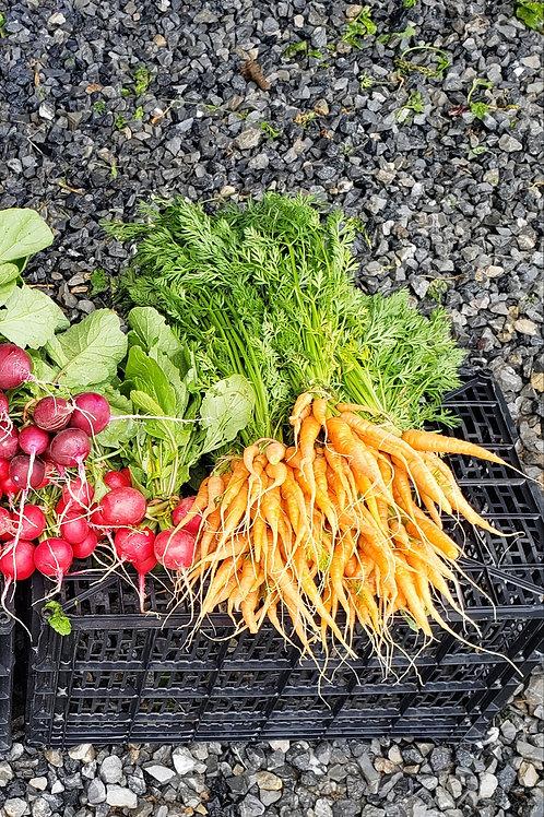 Baby carrots(in bunchs)