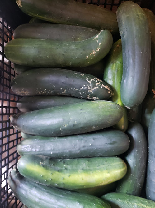 Regular cucumbers