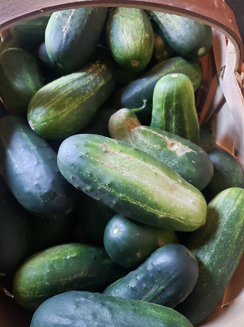 Picklie cucumbers(by the pound)