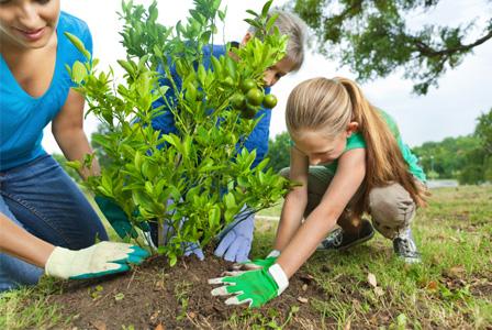 Aprende y Planta un Arbol