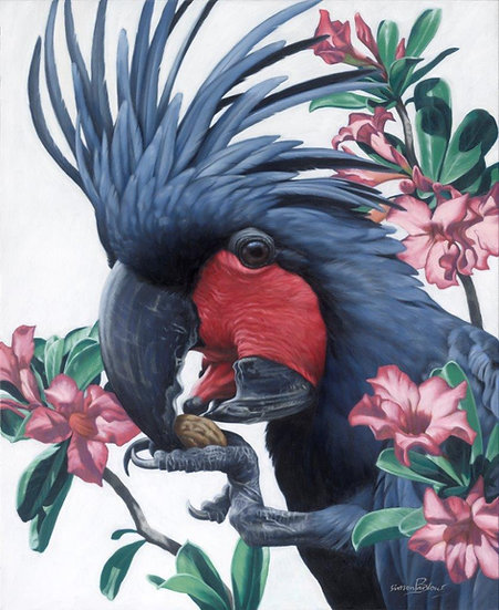 Palm Cockatoo and Plumeria giclee print, editions of 50 (canvas),20/20
