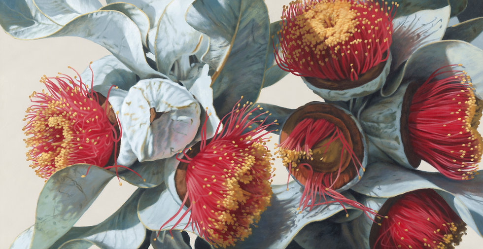 Macrocarpa Gums 0115 giclee print editions 15(canvas) 20(paper)