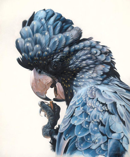 Black Cockatoo IV giclee print, editions of 50 (canvas), 20/20 (paper)