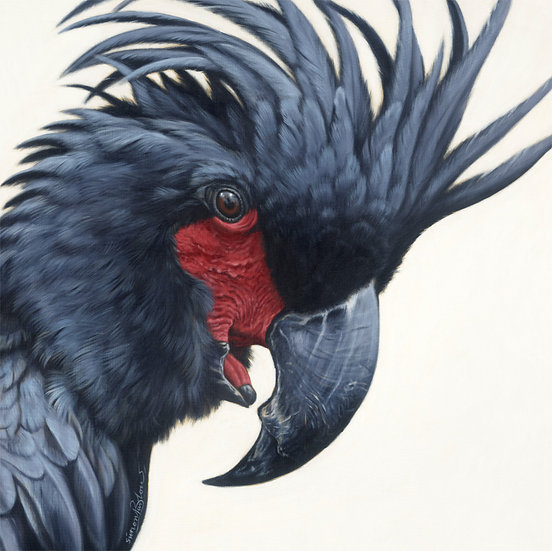 Palm Cockatoo 0316 giclee print, editions of 50 (canvas), 20 (paper
