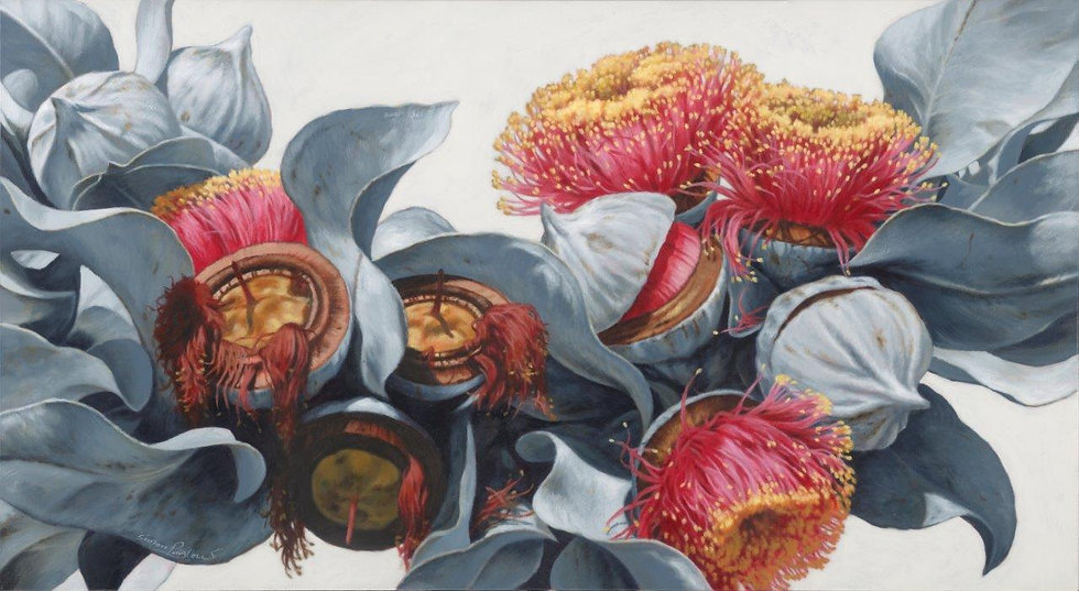 Macrocarpa Gums 0118 giclee print editions of 50 (canvas), 20 (paper)