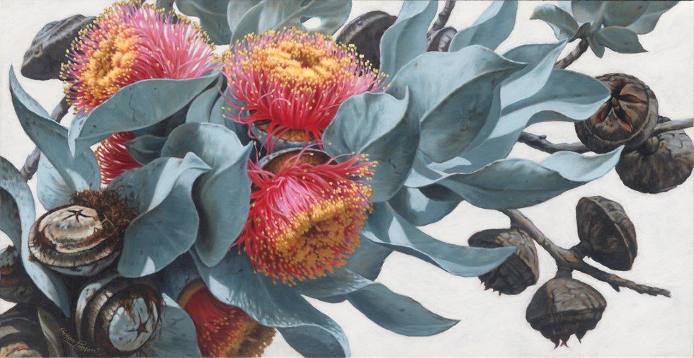 Macrocarpa Gums XIV giclee print  editions of 50 (canvas), 20 (paper)
