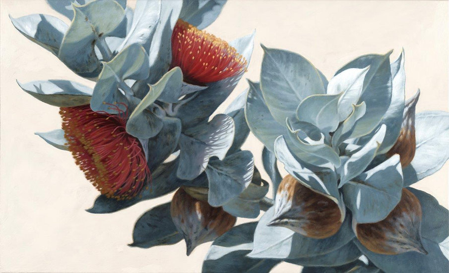 Macrocarpa Gums V giclee print editions of 50 (canvas), 20 (paperM