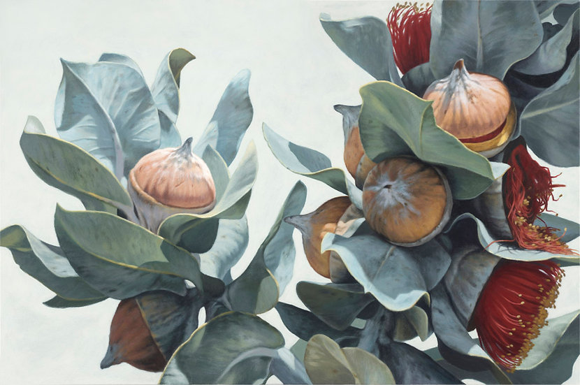 Macrocarpa Gums 0215 giclee print editions of 50 (canvas), 20 (paper)