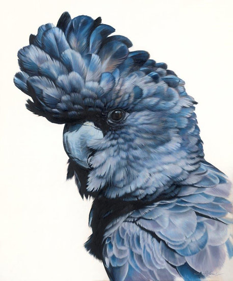 Black Cockatoo II giclee print, editions of 50 (canvas), 20/20 (paper)