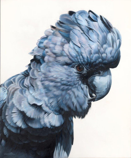Black Cockatoo V giclee print, editions of 50 (canvas), 20/20 (paper)
