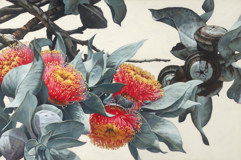 Macrocarpa Gums XIII giclee print editions of 50 (canvas), 20 (paperM