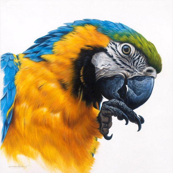 Blue-and-yellow Macaw giclee print, editions of 50 (canvas), 20 (paper)