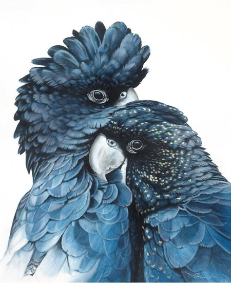 Black Cockatoos I giclee print, editions of 50 (canvas), 20/20 (paper)
