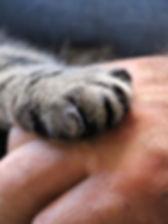 cats-paw-1375792_1280.jpg