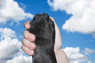 dog-2383071_1920.jpg