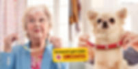 pedigree_dog_dates_montage-1024x512.jpg