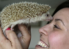 Hedgehogs-Go-Mainstream.J4.jpg