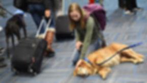 united-airlines-comfort-dog.jpg