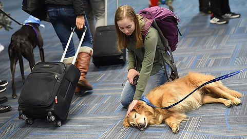 united-airlines-comfort-dog.jpg