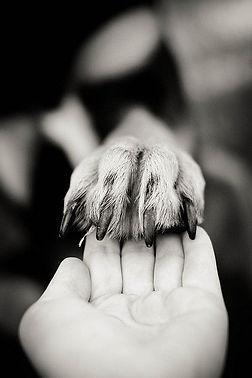 Hand in Paw.jpg