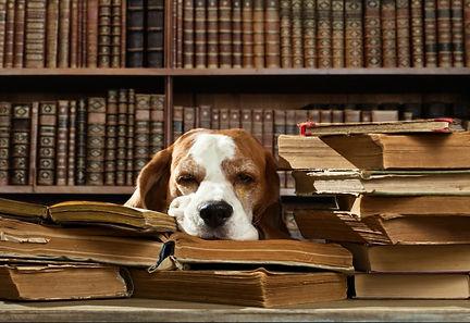 chien biblio.jpg
