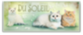 Du Soleil cattery