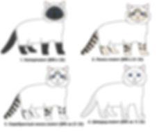 Генетика колорного окраса