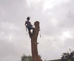 Eucalyptus Dismantle.