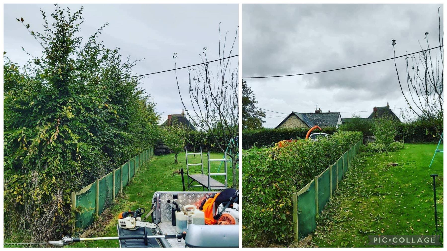 Beech Hedge Reduction.