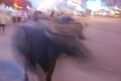 Night Bullocks